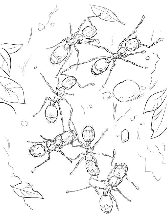 ausmalbilder ausmalbilder ameisen zum ausdrucken