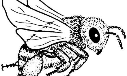 Ausmalbilder: Bienen