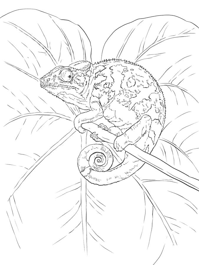 ausmalbilder ausmalbilder chameleon zum ausdrucken