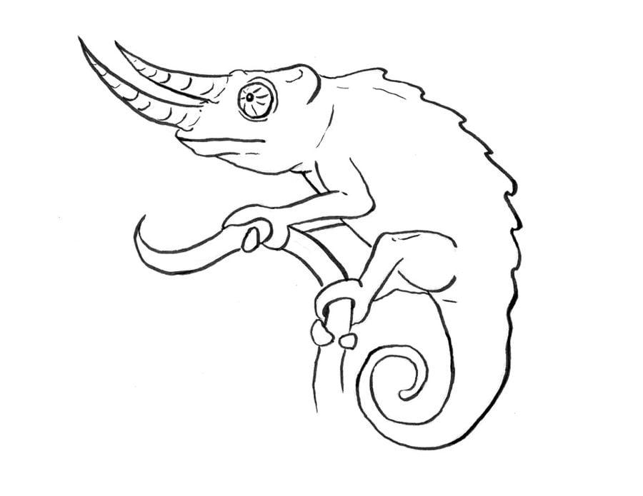 ausmalbilder: ausmalbilder: chameleon zum ausdrucken