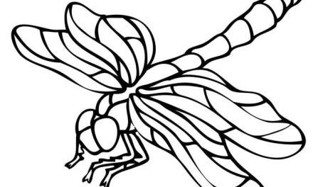 Ausmalbilder: Libelle