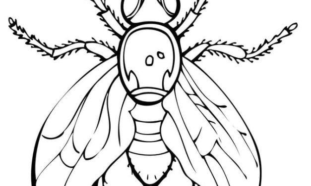 ausmalbilder insekten zum ausdrucken kostenlos für