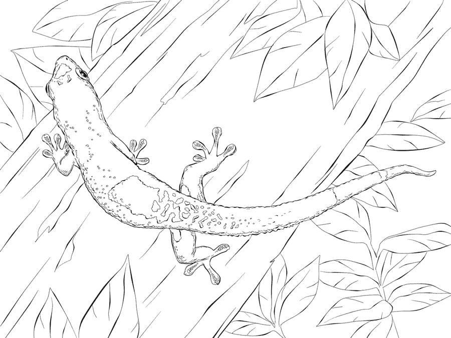 ausmalbilder ausmalbilder gecko zum ausdrucken