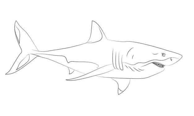 Ausmalbilder: Weißer Hai