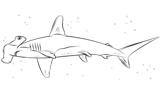 Ausmalbilder: Hammerhai