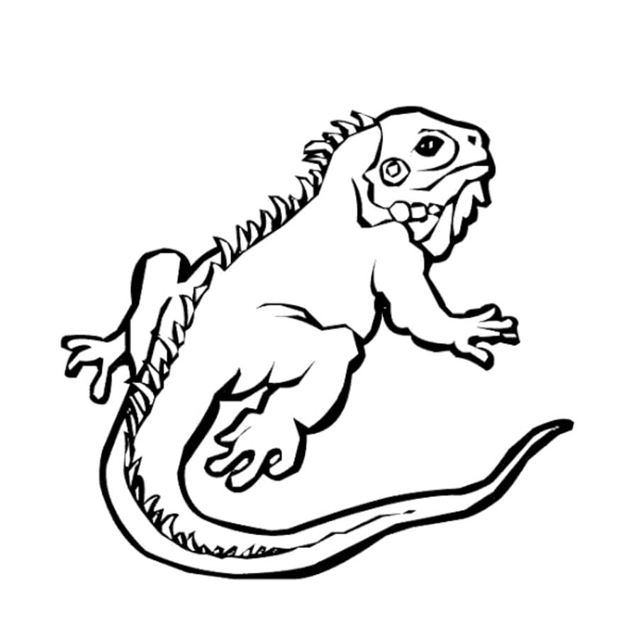 Coloring Pages Coloring Pages Iguana Printable For Kids Adults Free