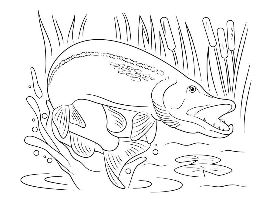 Ausmalbilder: Hecht Ausmalbilder Fische Tiere