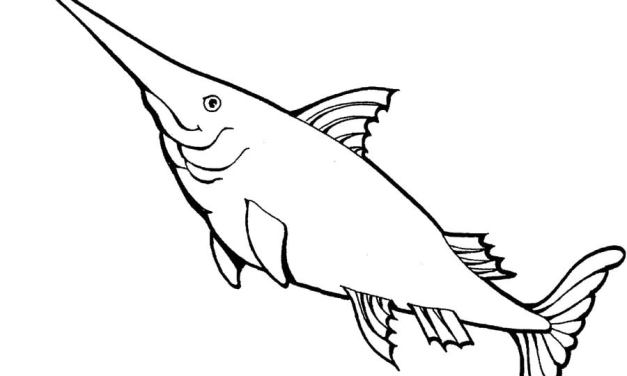 Ausmalbilder: Schwertfisch