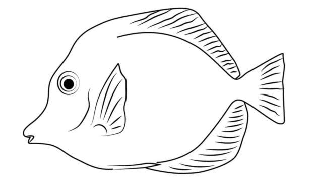 Ausmalbilder: Doktorfische