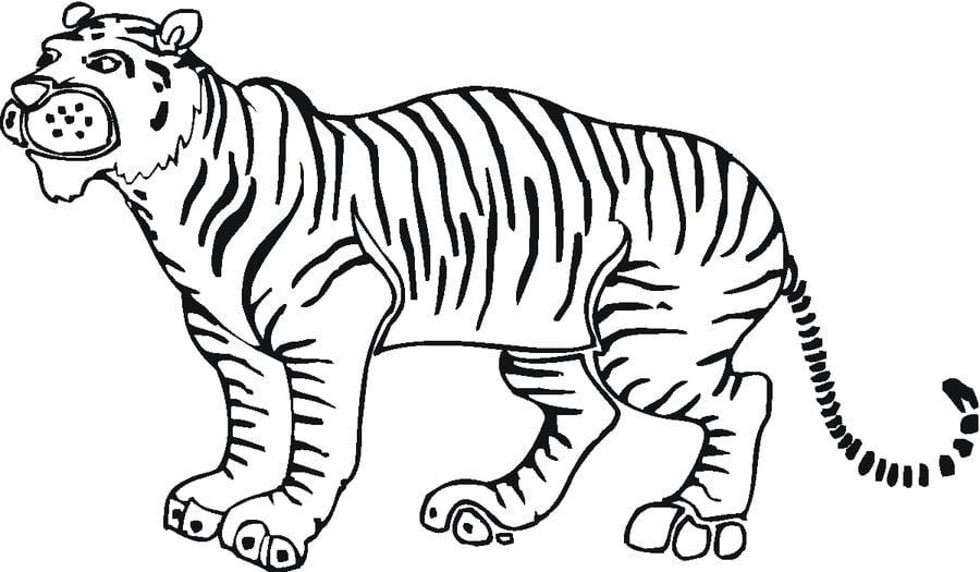ausmalbilder ausmalbilder tiger zum ausdrucken