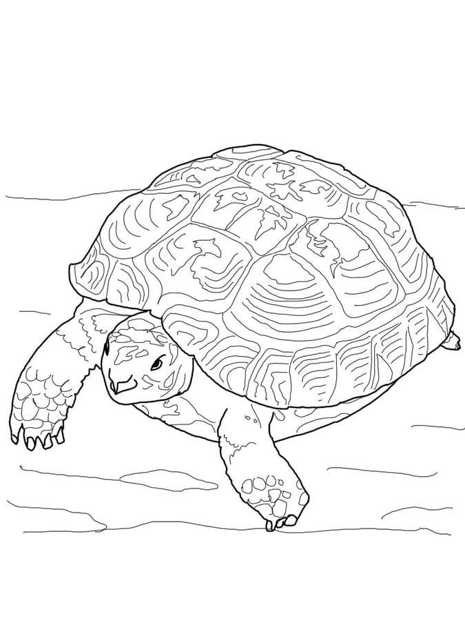ausmalbilder: ausmalbilder: schildkröte zum ausdrucken