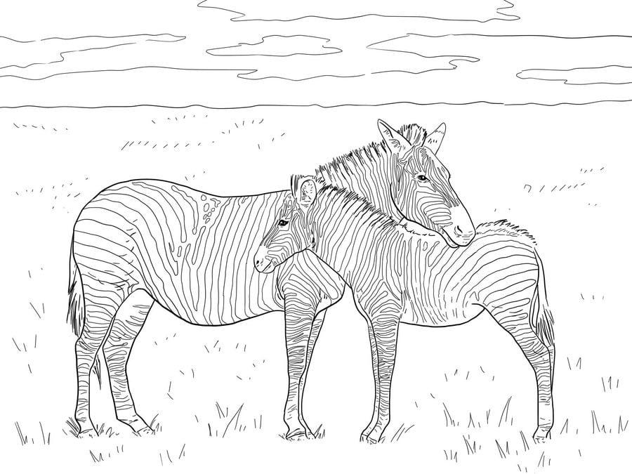 ausmalbild zebras  cartoonbild