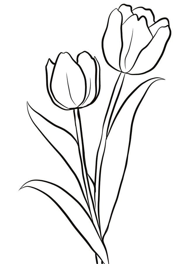 ausmalbilder ausmalbilder tulpen zum ausdrucken