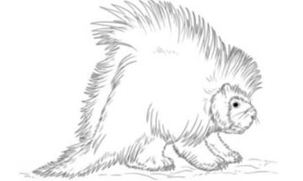 Stachelschweine