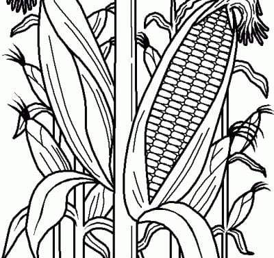 Coloring pages: Maize