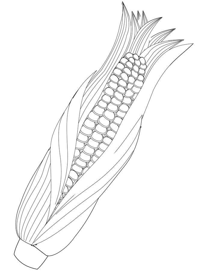 Ausmalbilder: Maize Ausmalbilder Gemüse Pflanzen