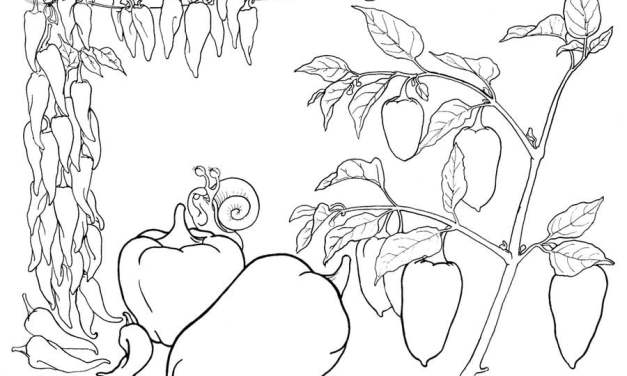 Coloring pages: Pepper