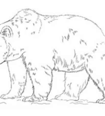 Come Disegnare Animali Facili Tutorial Passo Per Passo Per Bambini
