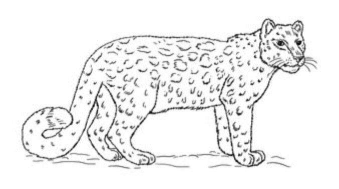 leopard zeichnen schritt für schritt tutorial für kinder