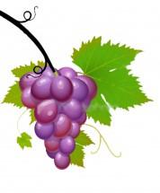 Картинки виноград: распечатать или скачать бесплатно ...