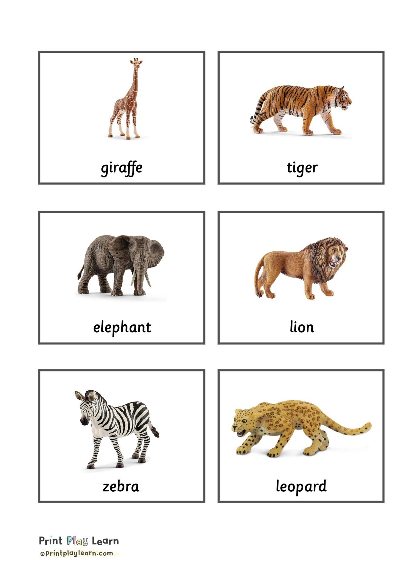 Jungle Animal Classification Cards