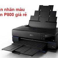 Máy in nhãn màu Epson P800 giá rẻ cho doanh nghiệp