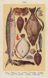 "Mrs Beeton, 'Fish ', c.1910. An original antique chromo-lithograph. 4"" x 7""."