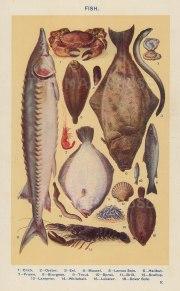 "Mrs Beeton, 'Fish ', c.1910. An original antique chromo-lithograph. 4"" x 7""."