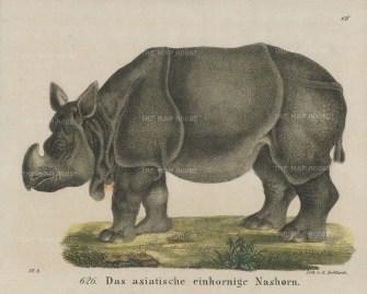 """Helfarth: Rhinoceros. 1834. A hand coloured original antique lithograph. 7"""" x 6"""". [NATHISp7441]"""