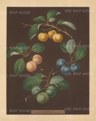 Plums: Drap d'Or, White Gage, Blue Gage and Green Gage.