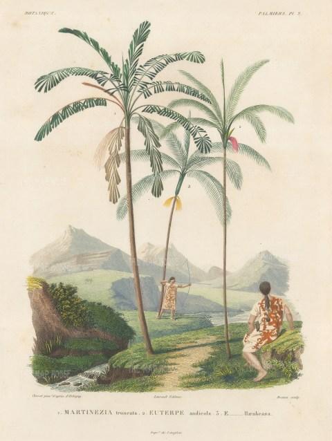 Palms (Attalea): Martinezia truncata, Euterpe andicola and Euterpe Haenkeana with Guaranins hunting with bow and arrow.