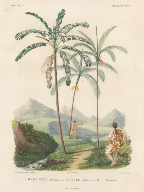 Palms (Attalea). Martinezia truncata, Euterpe andicola and Euterpe Haenkeana with Guaranins hunting with bow and arrow.