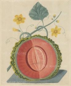 Melon: Scarlet-fleshed Rock Melon.