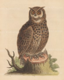 Owl: Horned Owl from Athens.