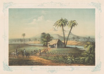 Cuba: Vega De Tabaco (Tobacco Farm). Vista De Una Vega De Tabaco. With decorative blue border. From the 2nd 'pirate' edition by Bernardo May.