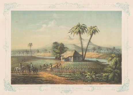 Cuba: Vega De Tabaco (Tobacco Farm). Vista De Una Vega De Tabaco. With decorative blue border. From the 2nd 'pirate' edition by Bernardo May.