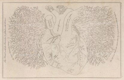 Heart: Diagram of the heart and arterial systems.
