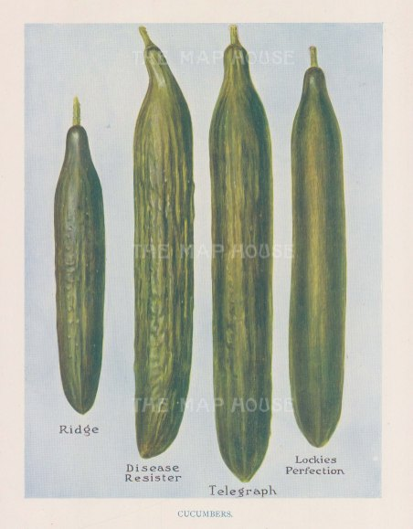 Cucumbers: Ridge, Dises resister, Telegraph, Lockies Perfection.