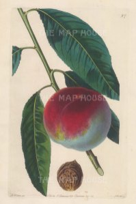 Spring Grove Peach with inset of stone.