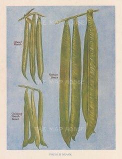 French beans: Runner beans, Dwarf beans and Climbing beans.