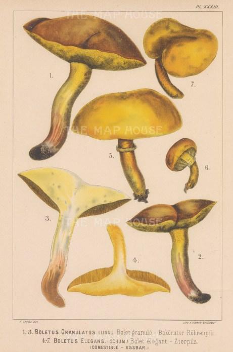 Boletus Granulatus (Weeping bolete) and Boletus Elegans (Greville's bolete) Edible.