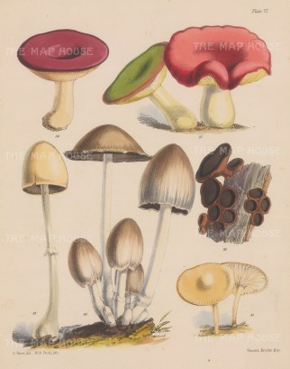 Russula (two varieties), Bulgaria, Agaricus, Coprinus and Hygrophorus.