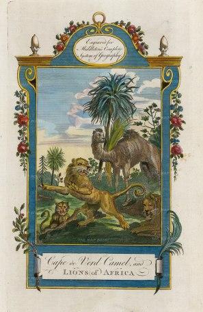 Lions and Cape de Verd Camel.