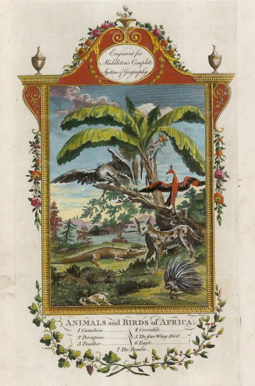 Animals and Birds of Africa: Chameleon, Porcupine, Panther, Crocodile, Four Winged Bird, Eagle, Bomba. With ornate border with garlands.