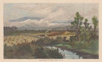 "Picturesque Australia: Taiera Plain. 1888. A hand coloured original antique wood engraving. 11"" x 9"". [NWZp229]"