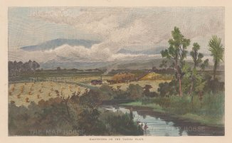 "Picturesque Australia: Taiera Plain. 1888. A hand coloured original antique wood engraving. 11"" x 9"". [NWZp229]"