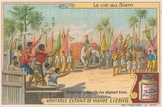 """Liebig's Extract: Celebration of the white elephant. c1910. An original antique chromolithograph. 4"""" x 3"""". [SEASp1612]"""