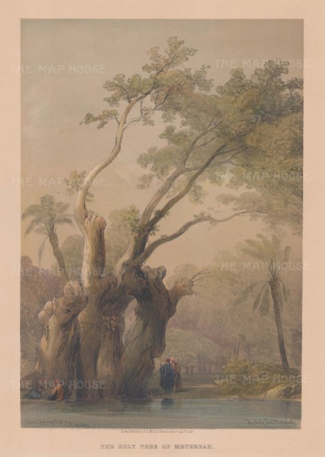 "Roberts: Holy Tree of Metereah. 1849. A hand coloured original antique lithograph. 11"" x 16"". [EGYp1100]"