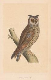 "Morris: Long Eared Owl. 1855. An original hand coloured antique lithograph. 5"" x 8"". [NATHISp7911]"