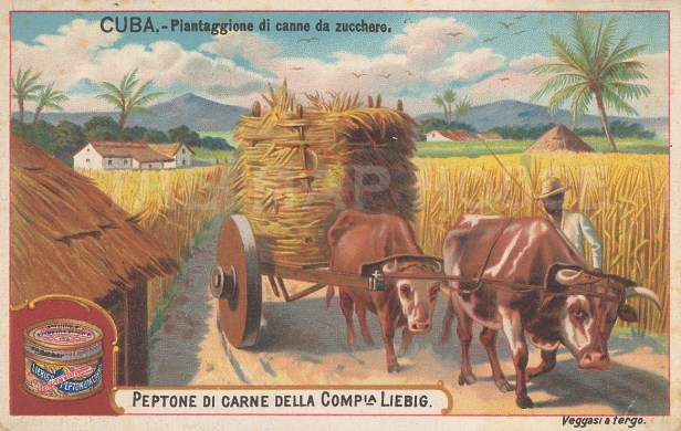 "Liebig's Extract: Sugar, Cuba. 1899. An original antique chromolithograph. 4"" x 3"". [WINDp1208]"